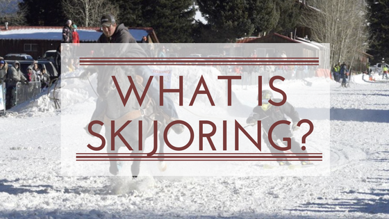 What is skijoring?