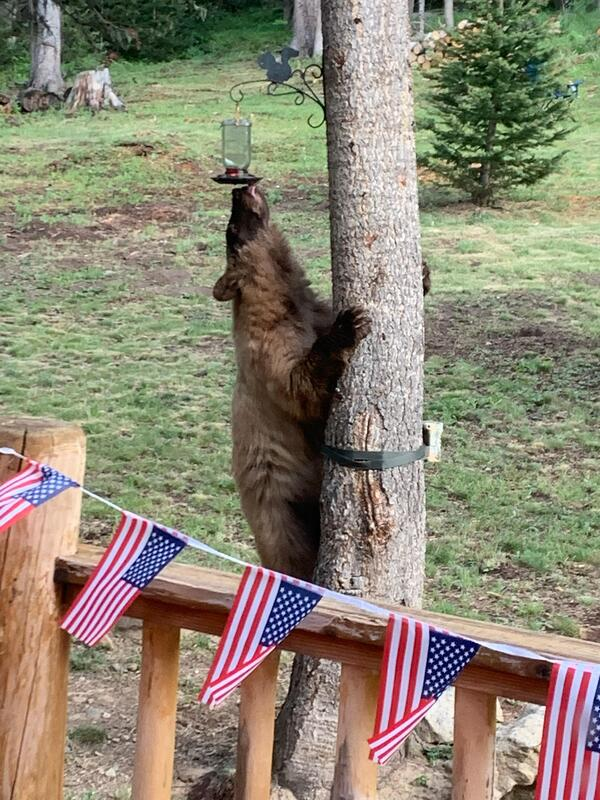 bear and feeder